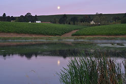 st.-jory-vineyard-wetlands-duck-pond-cel