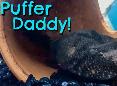 It's Puffy!