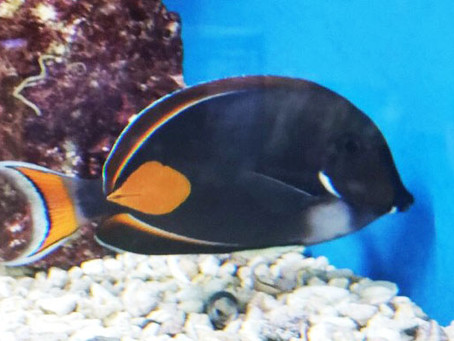 Rare Beauty - the Achilles Tang