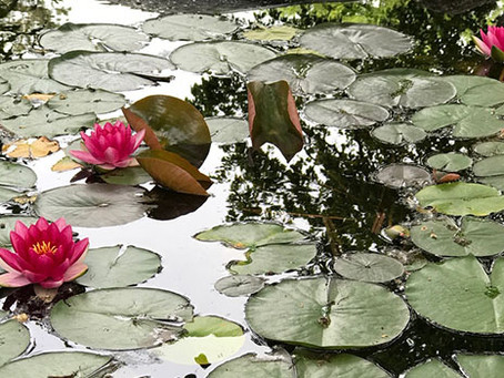Inspire with Water Lilies