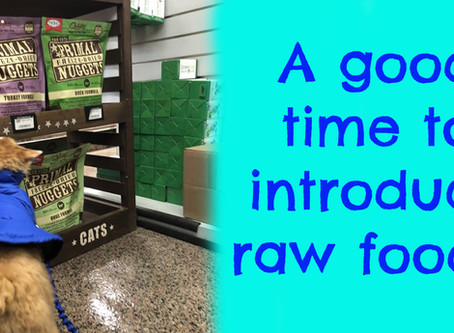 Raw foods for your pet
