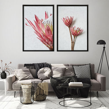 Red King Protea Wall Art Print Set   Collection 2