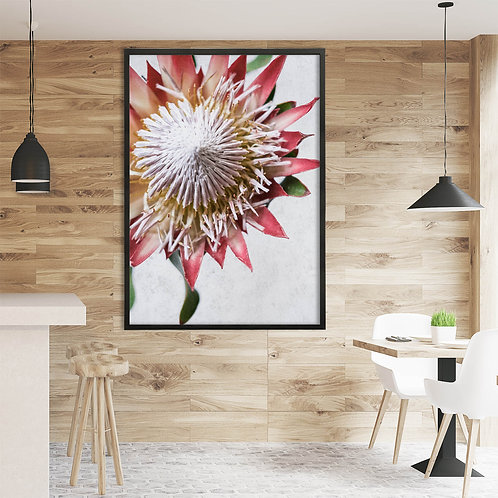 Red King Protea Wall Art | Single Print 9