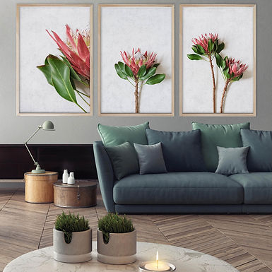 Red King Protea Wall Art Print Set | Collection 5