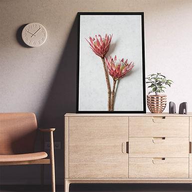 Red King Protea Wall Art | Single Print 6