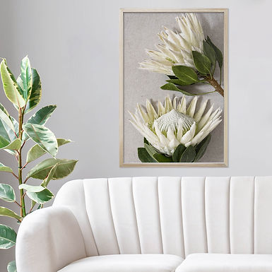 White King Protea Wall Art | Single Print 7