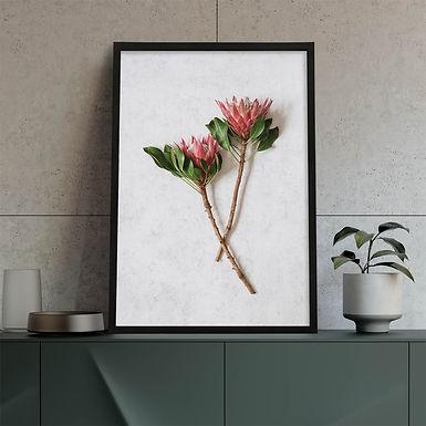 Red King Protea Wall Art | Single Print 3
