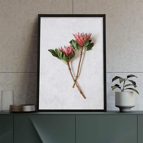 Red King Protea Wall Art   Single Print 3