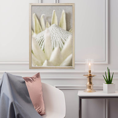 White King Protea Wall Art | Single Print 9