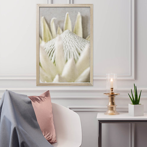 White King Protea Wall Art | Single Print 9