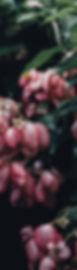 annie-spratt-166380-unsplash.jpg
