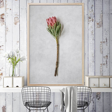 Venus Protea Wall Art | Single Print 4