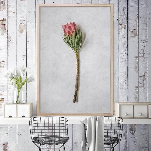 Venus Protea Wall Art | Single Print 4