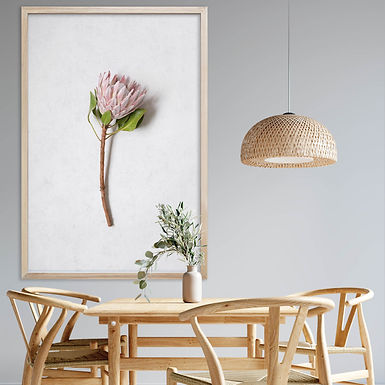 Blush Pink King Protea Wall Art   Single Print 14