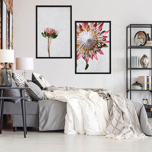 Red King Protea Wall Art Print Set   Collection 6