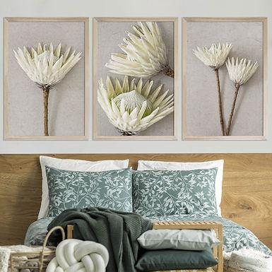 White King Protea Wall Art Print Set | Collection 7