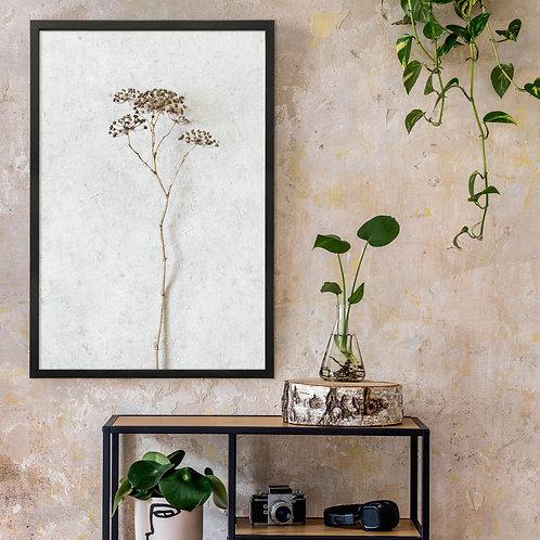 Dried Botanicals Wall Art Print 4