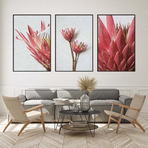 red madiba king protea wall art print set