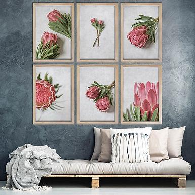 Venus Protea Wall Art Print Set   Collection 2