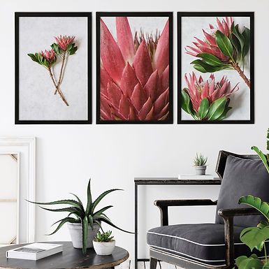 Red King Protea Wall Art Print Set   Collection 3