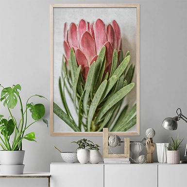 Venus Protea Wall Art   Single Print 1