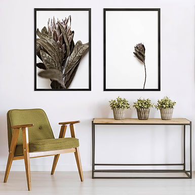 Dried Proteas Wall Art Print Set | Collection 1