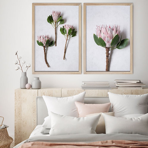 Blush Pink King Protea Wall Art Print Set | Collection 4