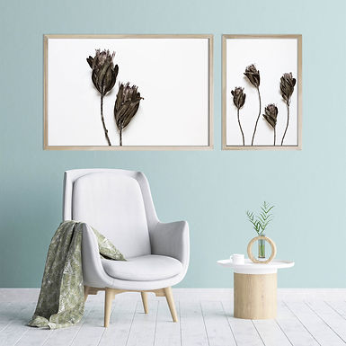 Dried Proteas Wall Art Print Set | Collection 3