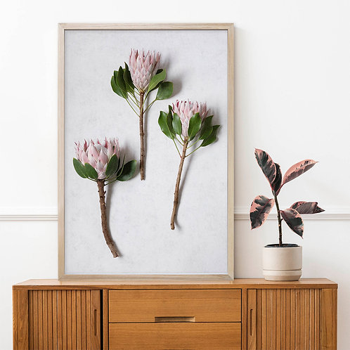 Blush Pink King Protea Wall Art   Single Print 3