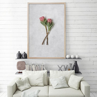 Venus Protea Wall Art | Single Print 5