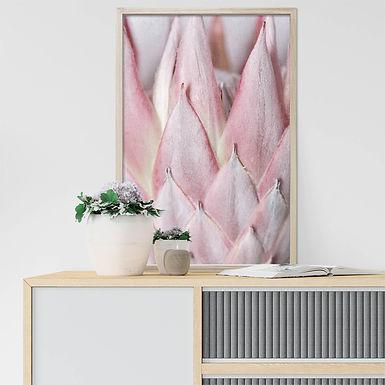Blush Pink King Protea Wall Art   Single Print 12
