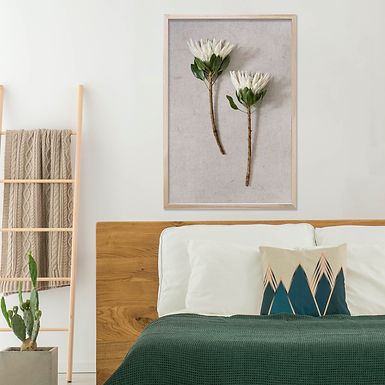 White King Protea Wall Art | Single Print 1