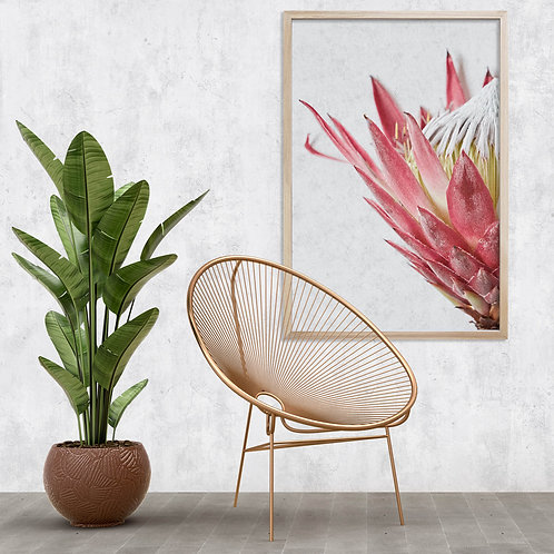 Red King Protea Wall Art | Single Print 10