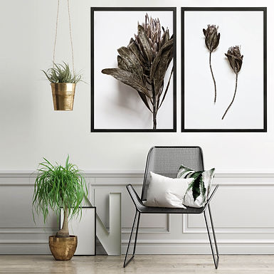 Dried Proteas Wall Art Print Set | Collection 4