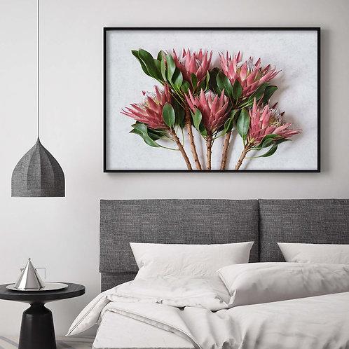 red king protea wall art print, madiba protea