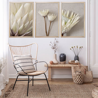 White King Protea Wall Art Print Set | Collection 5