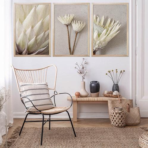 White King Protea Wall Art Print Set | Collection 5