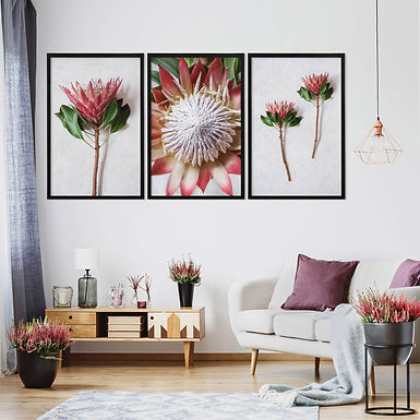 Red King Protea Wall Art Print Set | Collection 4