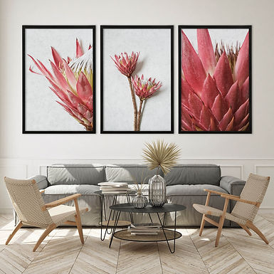 Red King Protea Wall Art Print Set   Collection 7