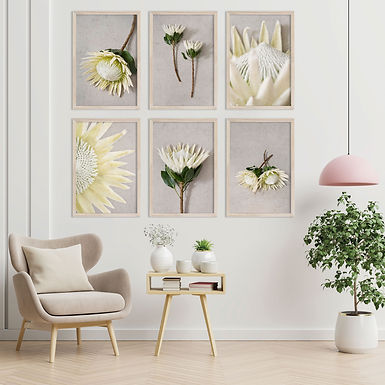 White King Protea Wall Art Print Set | Collection 2