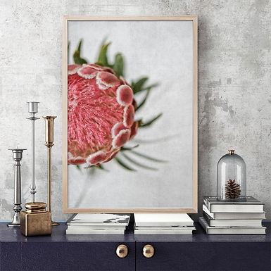 Venus Protea Wall Art | Single Print 2