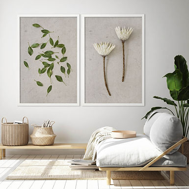 White King Protea Wall Art Print Set | Collection 6