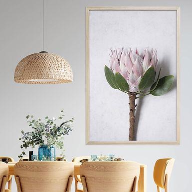 Blush Pink King Protea Wall Art   Single Print 6