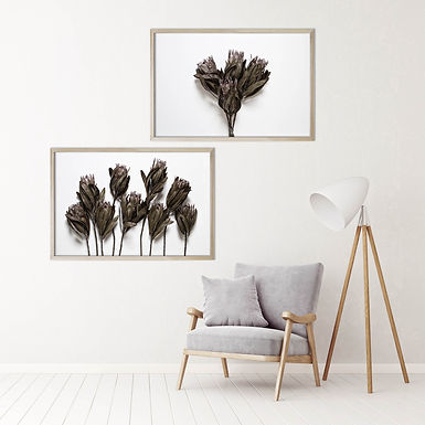 Dried Proteas Wall Art Print Set | Collection 2