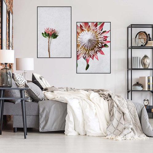 red king protea wall art print set, home decor