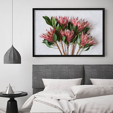 Red King Protea Wall Art | Single Print 2