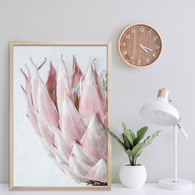 Blush Pink King Protea Wall Art | Single Print 13