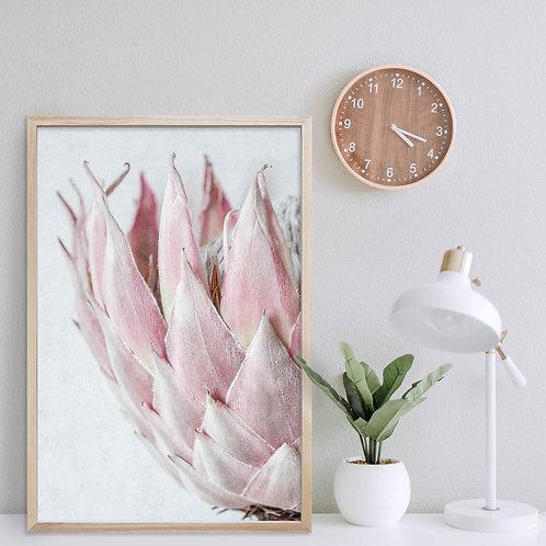Blush Pink King Protea Wall Art   Single Print 13