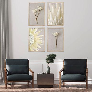White King Protea Wall Art Print Set | Collection 8