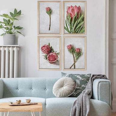 Venus Protea Wall Art Print Set   Collection 1